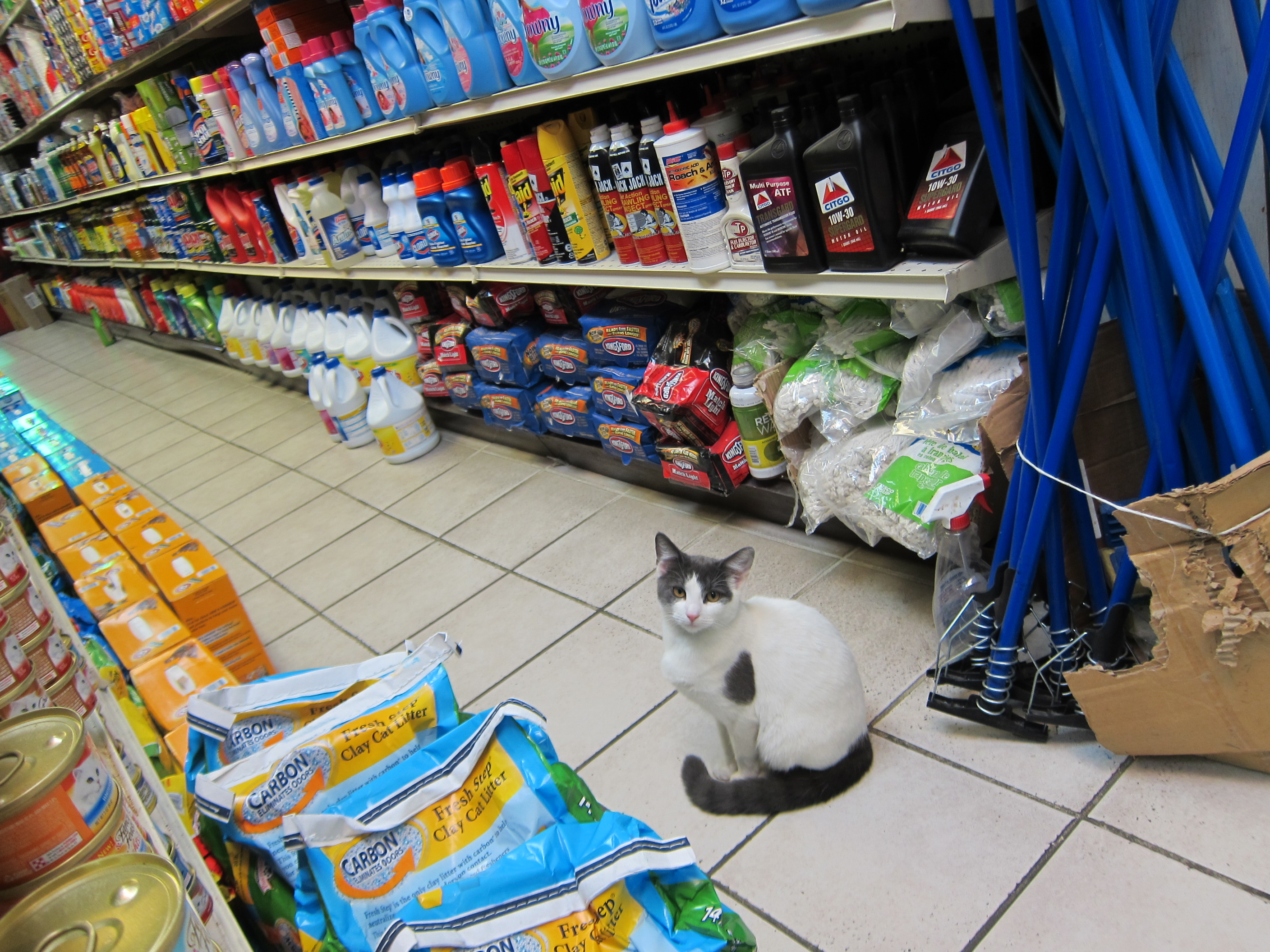 Bodega Cat by Seth Werkheiser via Flickr