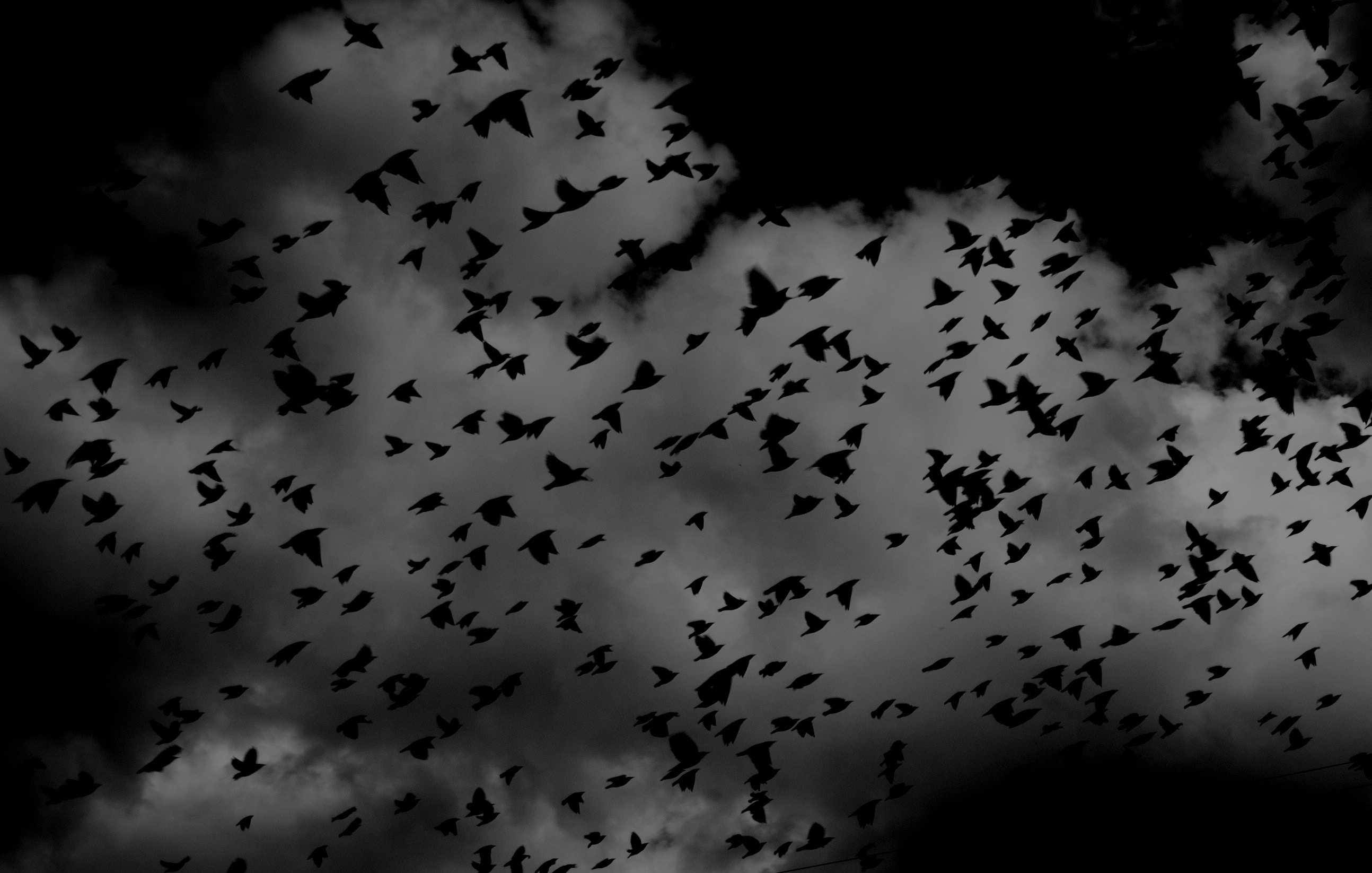 Black and white birds flying in the sky