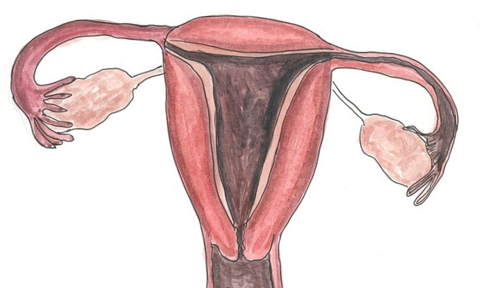 drawing of female sex organs