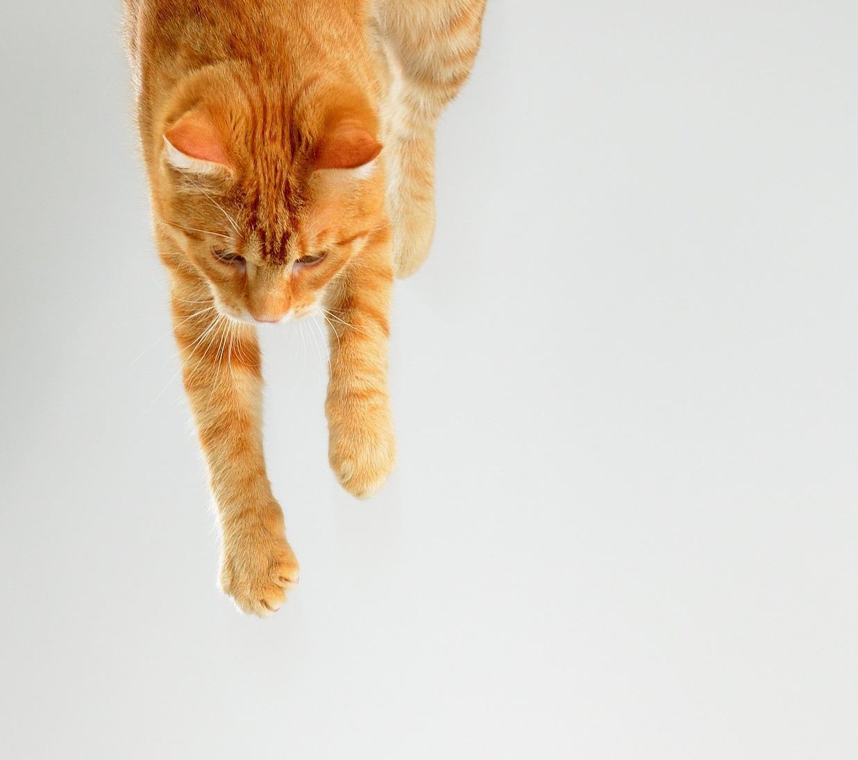 Schrödinger's Cat, But for Marriage - Electric Literature
