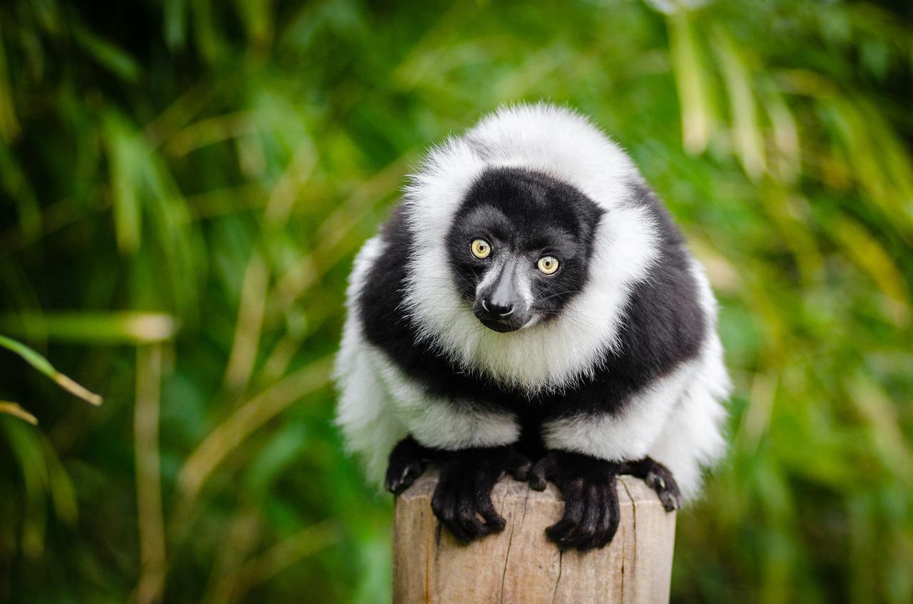 A Legal Thriller About a Magical Talking Lemur