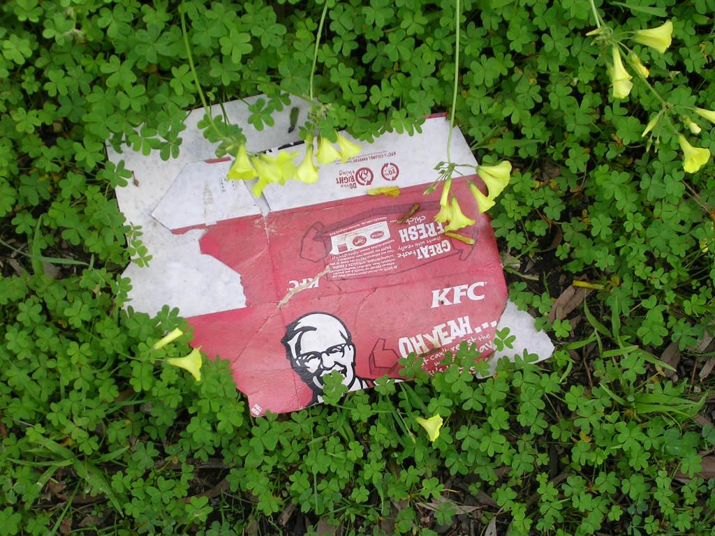 KFC box in the grass