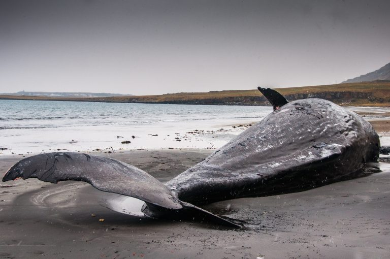 Beached whale