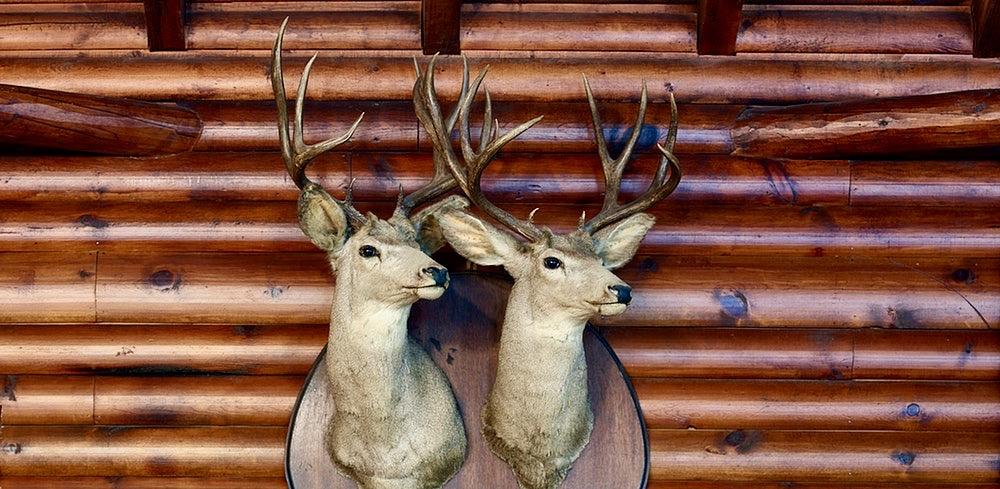 two taxidermy deer heads