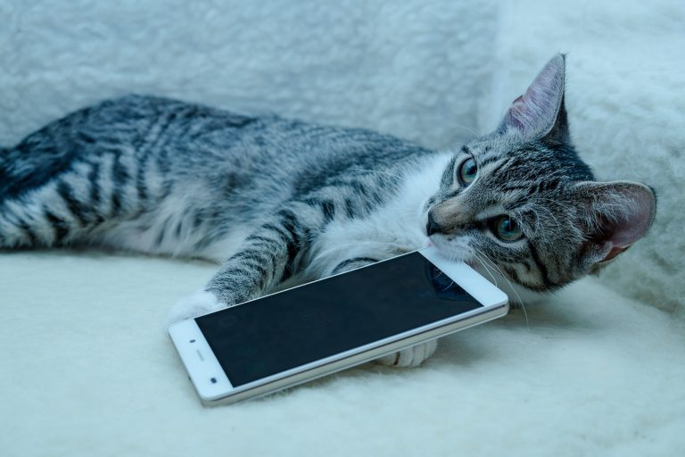 Cat with Cellphone