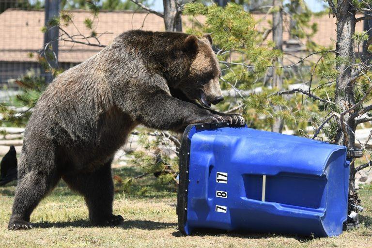 Bear and recycling nin