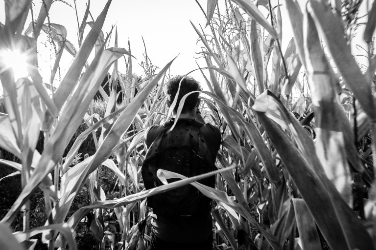 Person in shadow disappearing into a cane field