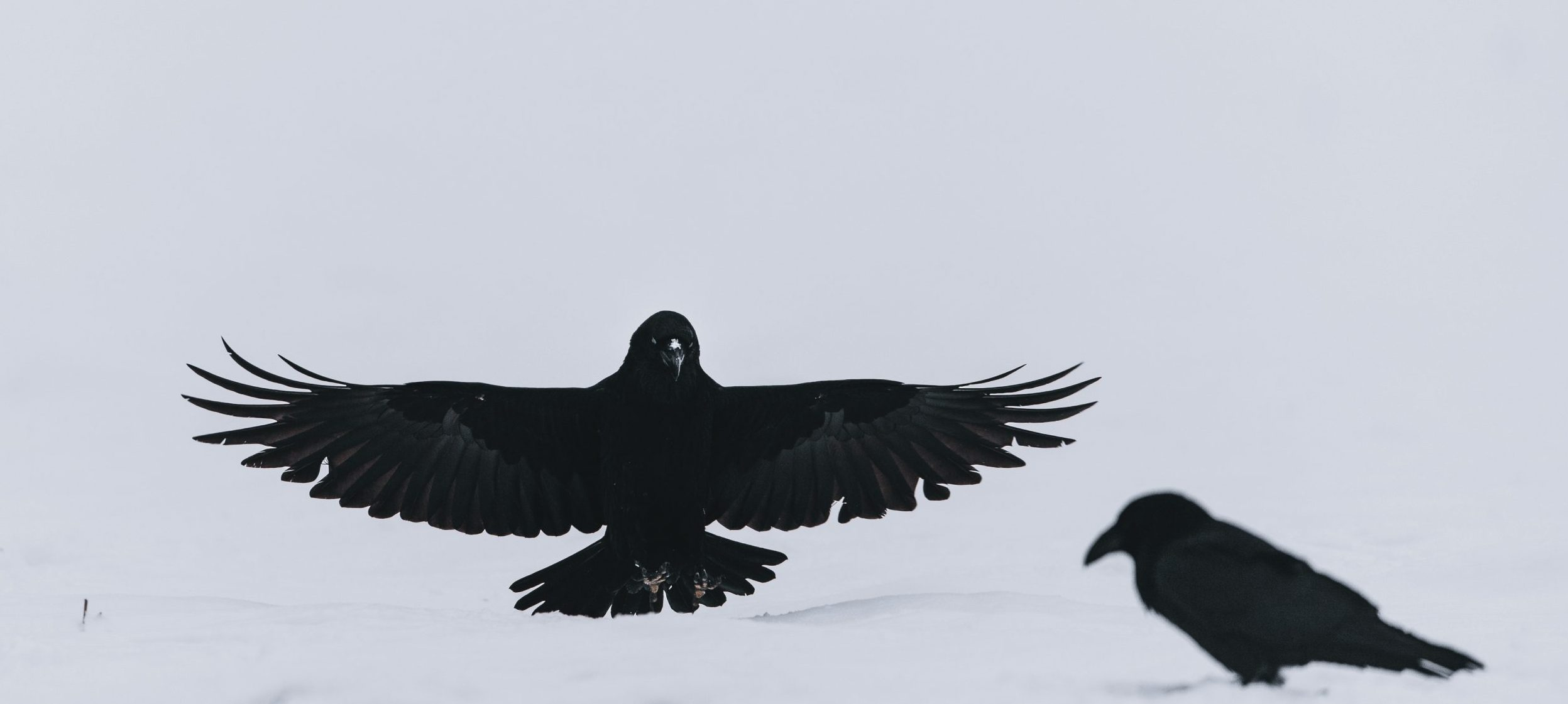 two birds on snow