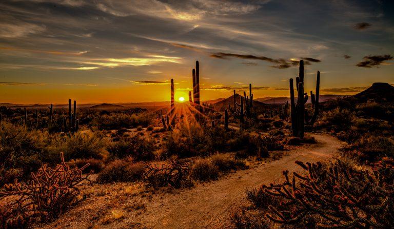 cacti at sunset