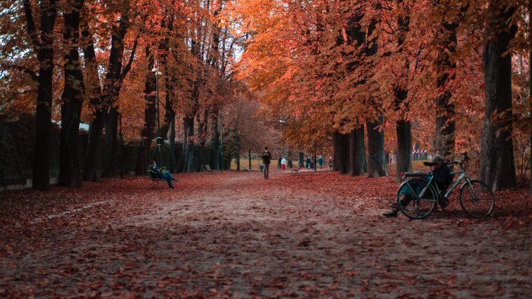 park benches under autumn trees
