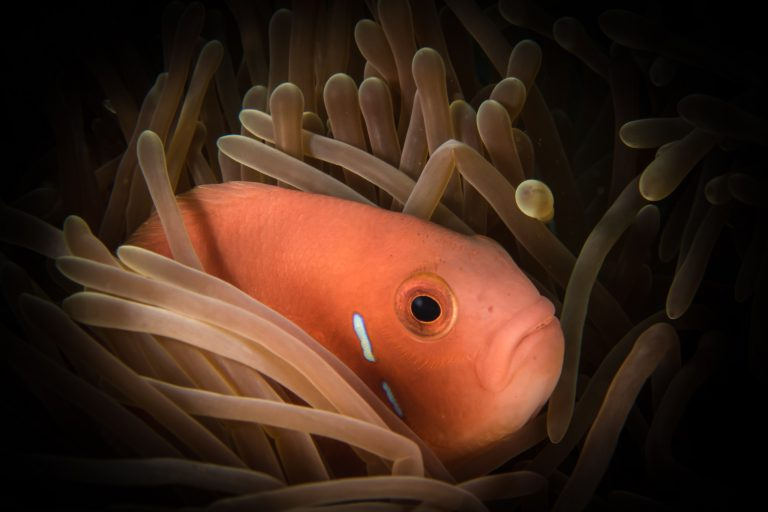melancholy orange fish